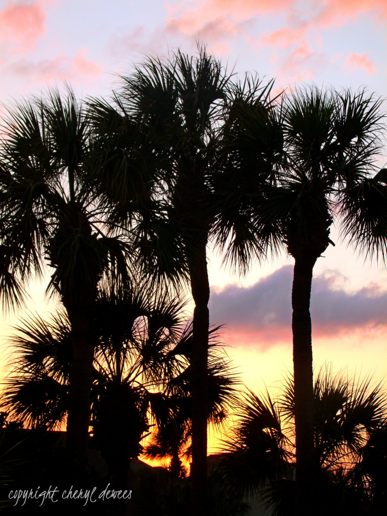 Sunset Palms by Cheryl Dewees